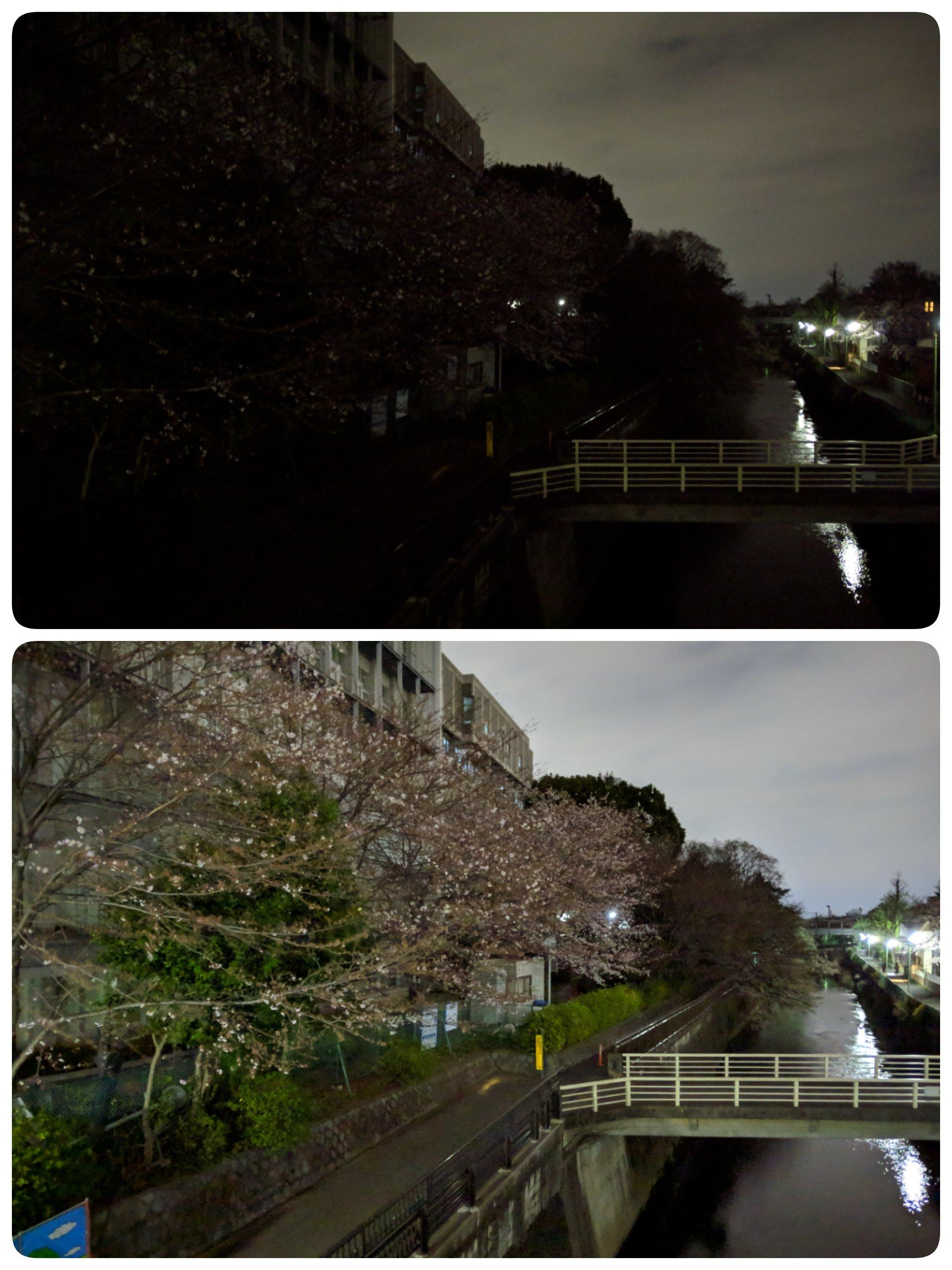 成城学園2019年桜(Pixel3夜景モード)