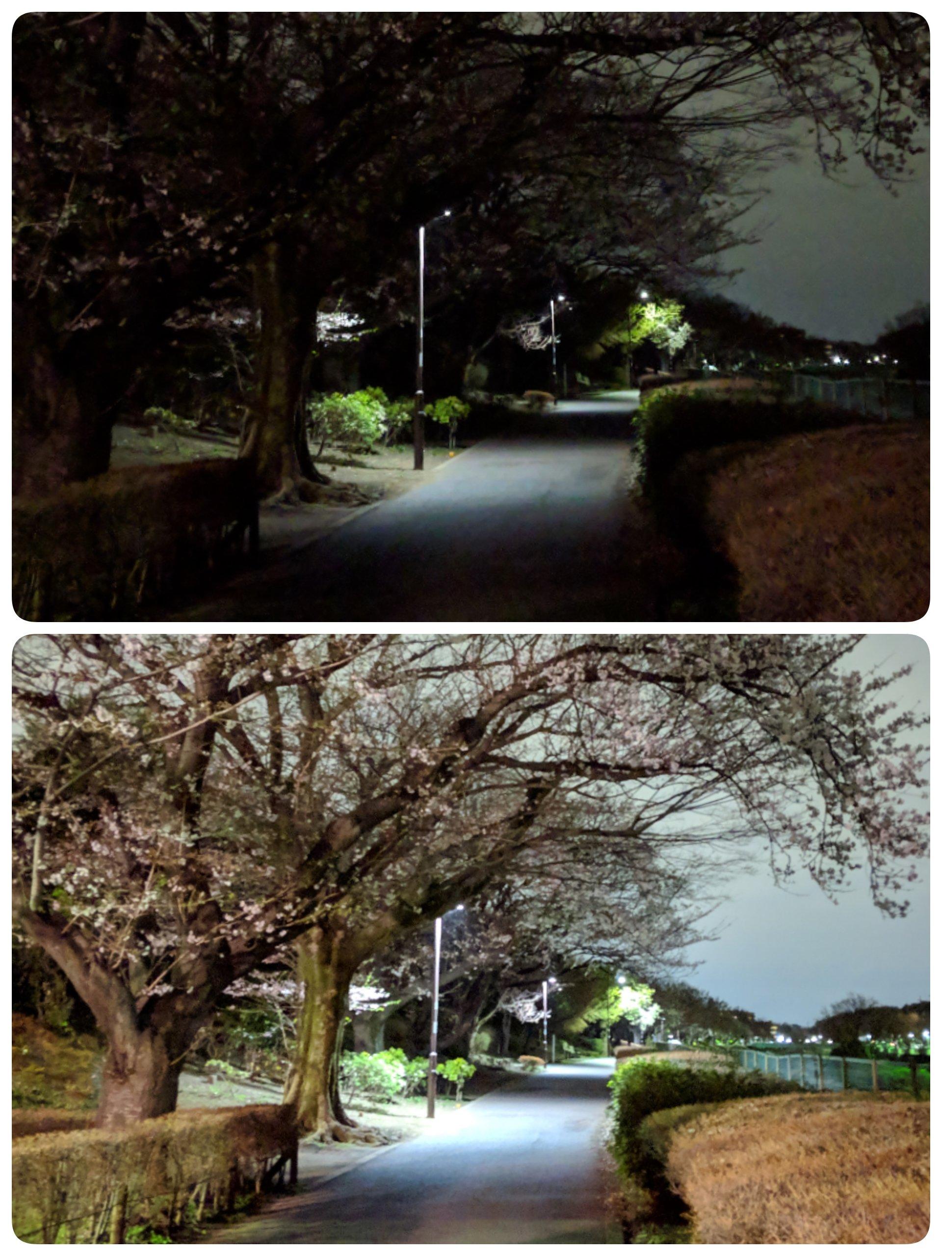 喜多見野川の2019年桜(Pixel3夜景モード)