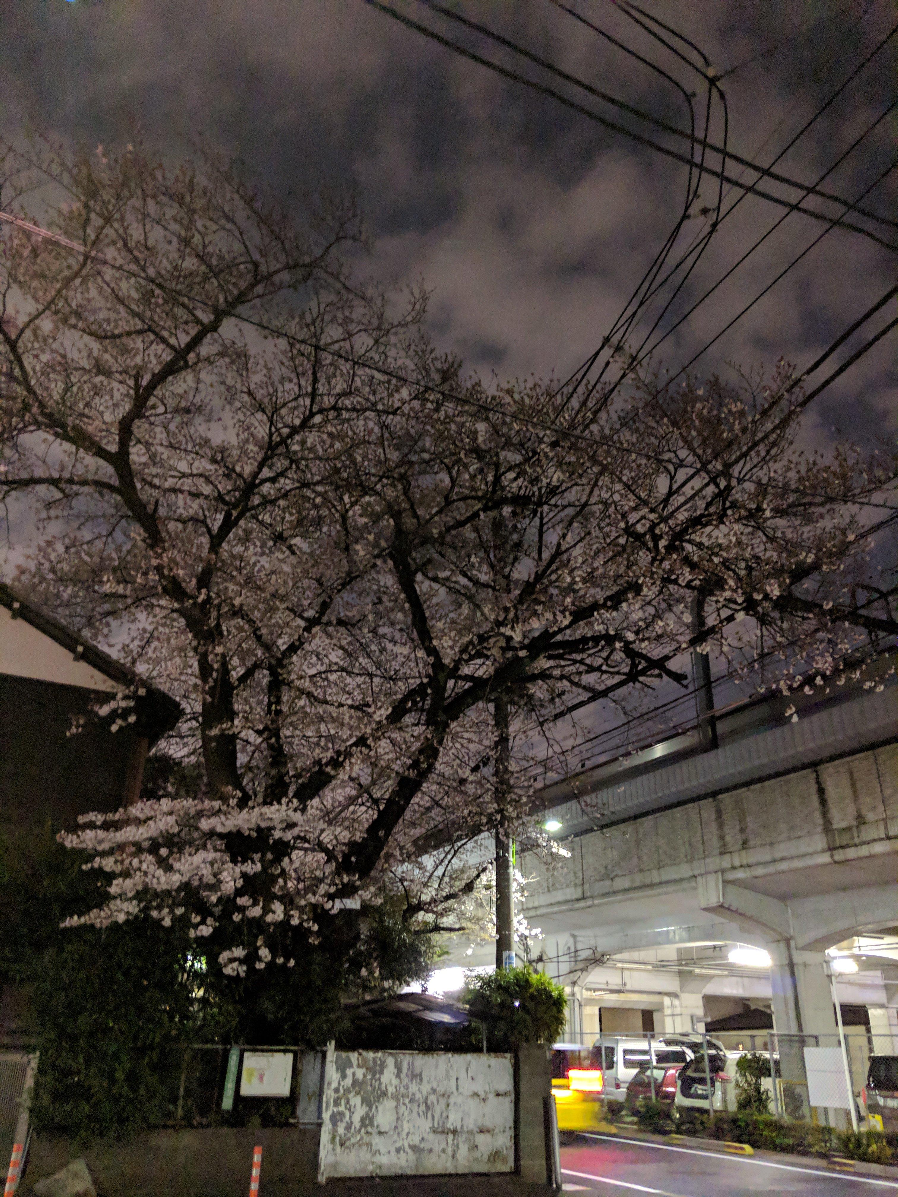 小田急線祖師ヶ谷大蔵付近の2019年桜(Pixel3普通モード)