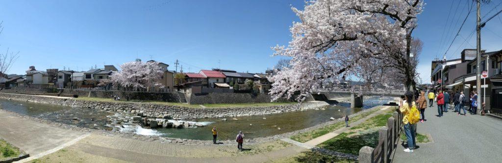 飛騨高山。宮川河川敷の桜